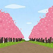 桜がきれいです!